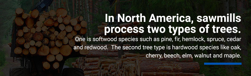 sawmills-in-north-america-process-2-types-of-trees-graphic